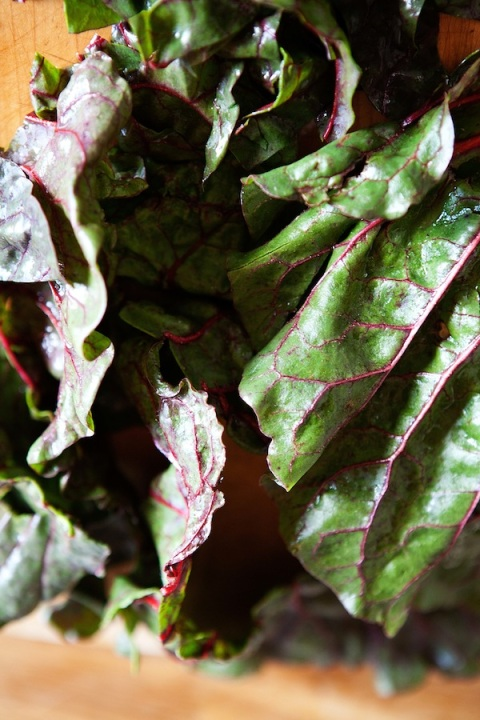 chard for panade